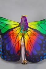 5353. Бабочка Лимонница. Вид сзади.